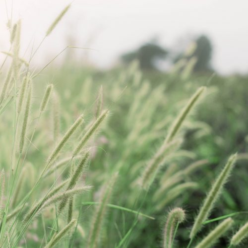 Grass with the beauty of nature.